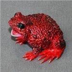 Bronze Frog Boobala